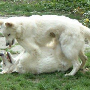 Résolution de problèmes de comportement avec plusieurs animaux