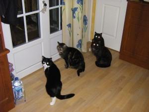 Samba et les chatons devenus chats...