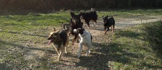 Est-il bon d'avoir plusieurs chiens ?