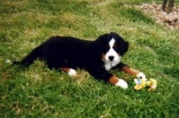 ma vision du chien : la fidélité 6
