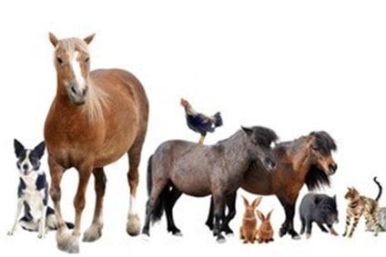 Soins énergétiques à distance avec votre animal