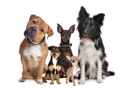 http://sylviechaiffre-animalcom.com/quel-chien-vous-correspond/