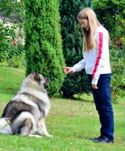 éducation canine à domicile