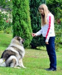 Kind Hund Hundeschule