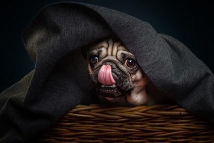 votre chien dévoilé