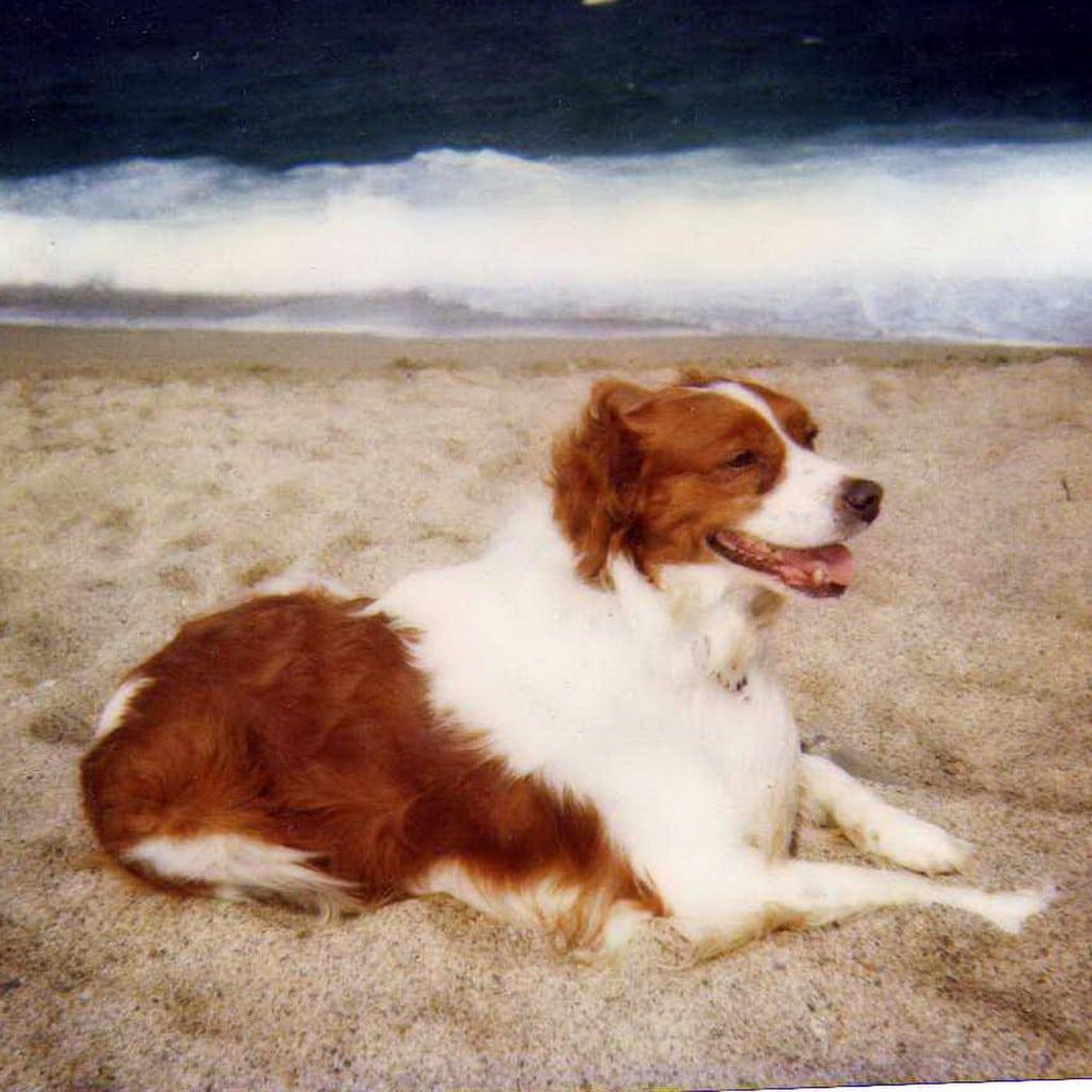 recettes de régime de lymphome de chien