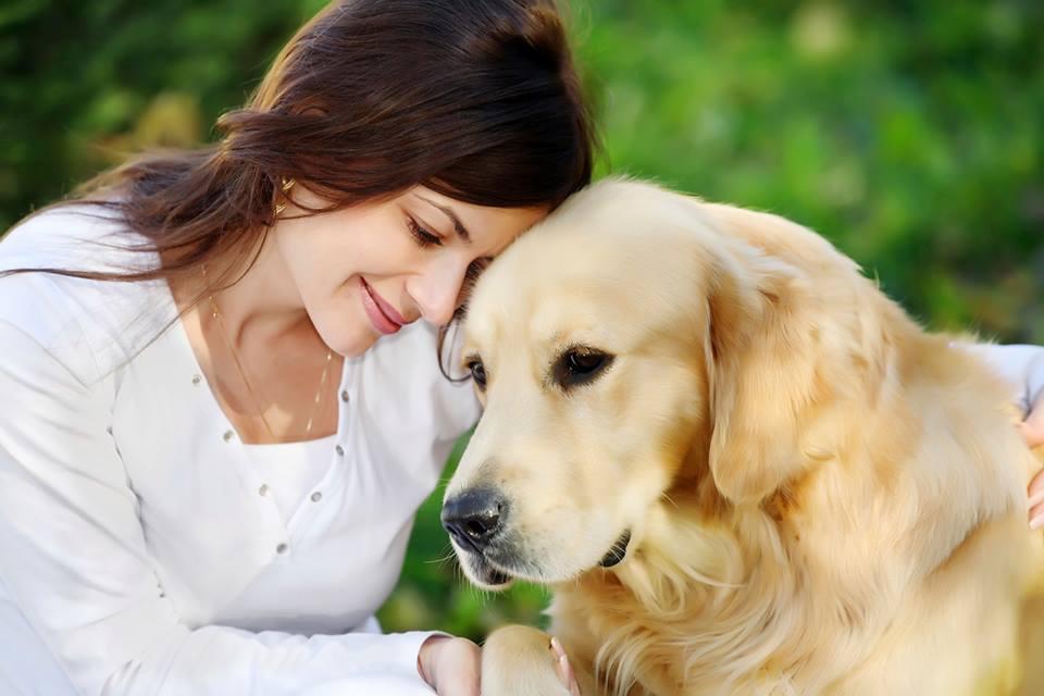 une histoire de relation homme-chien