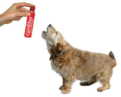 votre chien aboie comment le faire taire sylvie chaiffre animalcom 39 sylvie chaiffre. Black Bedroom Furniture Sets. Home Design Ideas