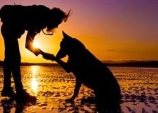 Comment on peut communiquer facilement d'âme à âme avec les animaux ?