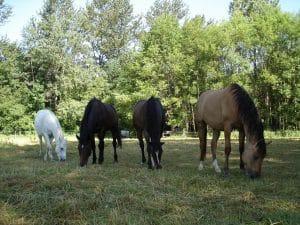 Le cheval et la hiérarchie