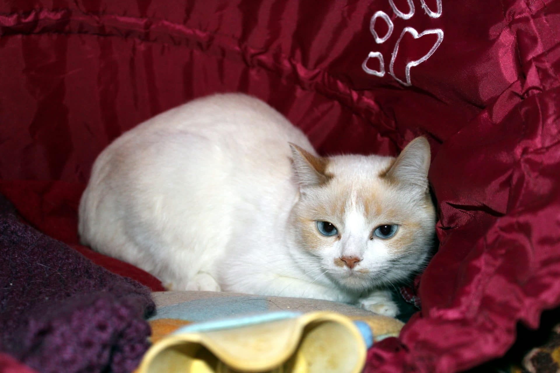 conseils pour d m nager avec un chat sylvie chaiffre animalcom 39 sylvie chaiffre animalcom 39. Black Bedroom Furniture Sets. Home Design Ideas