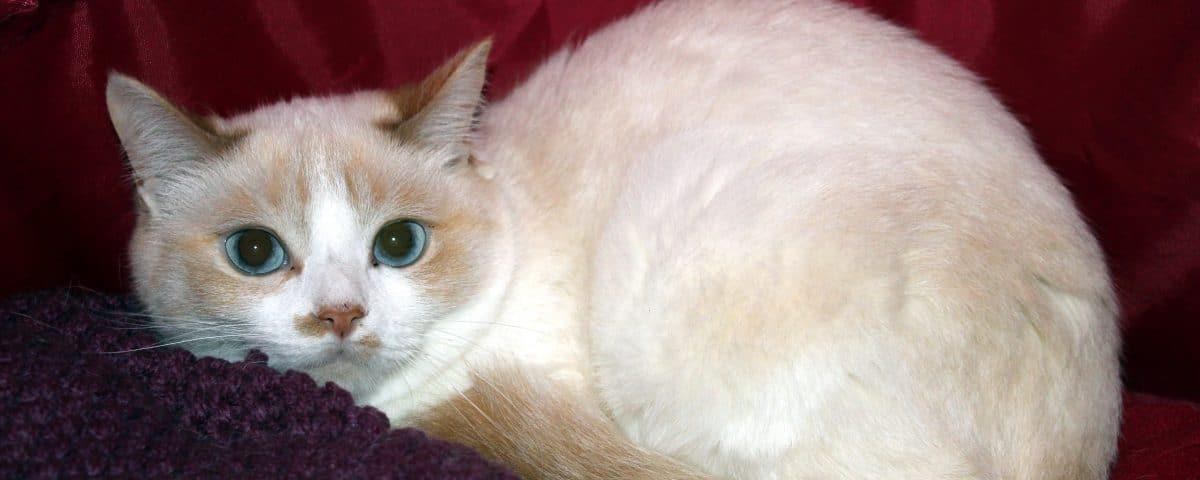 Conseils pour d m nager avec un chat sylvie chaiffre animalcom 39 sylvie - Conseils pour demenager ...
