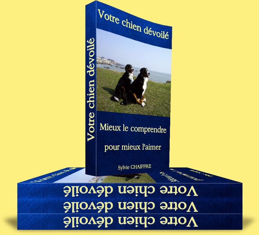 promener son chien sans laisse loi belgique