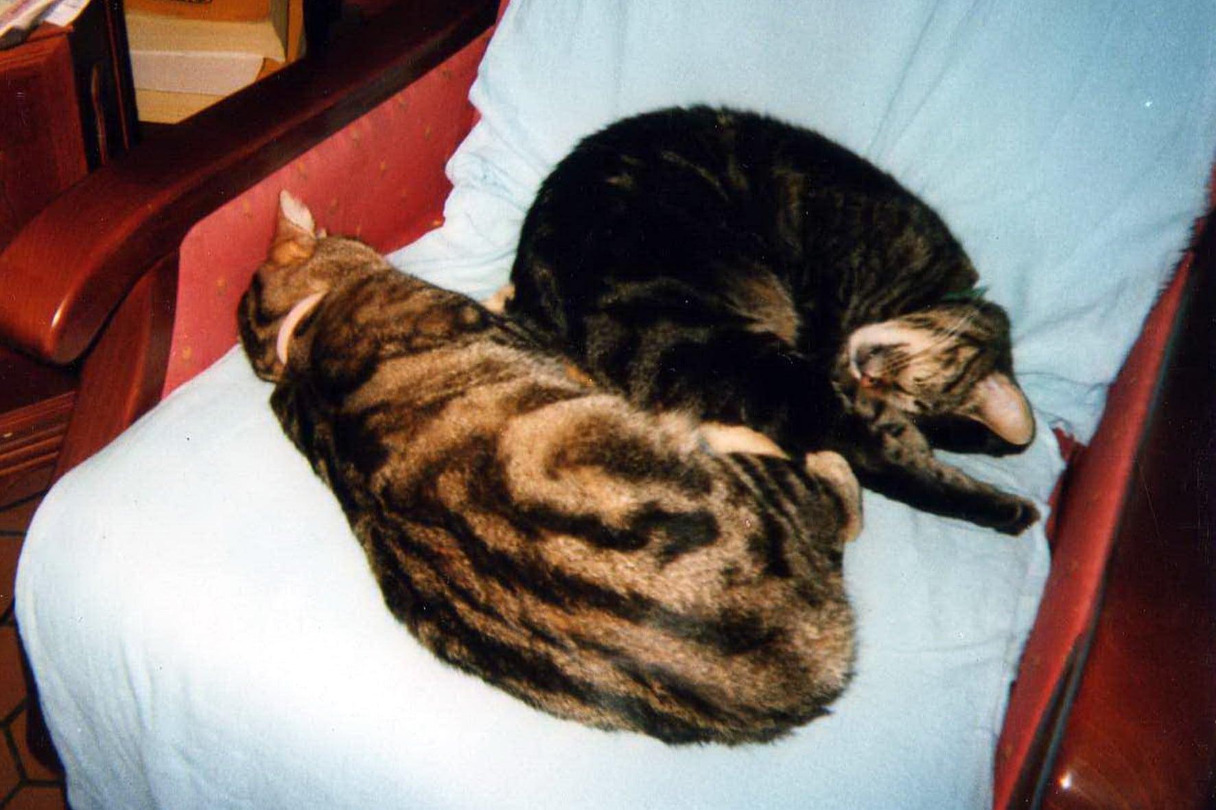 chat en appartement comment le rendre heureux sylvie chaiffre animalcom 39 sylvie chaiffre. Black Bedroom Furniture Sets. Home Design Ideas