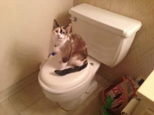 Pourquoi mon chat fait pipi partout ?