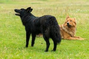 chien zen