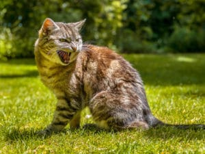 chat qui manifeste