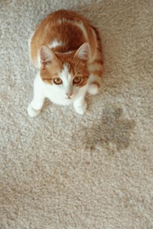 mon chat n'urine pas dans son bac