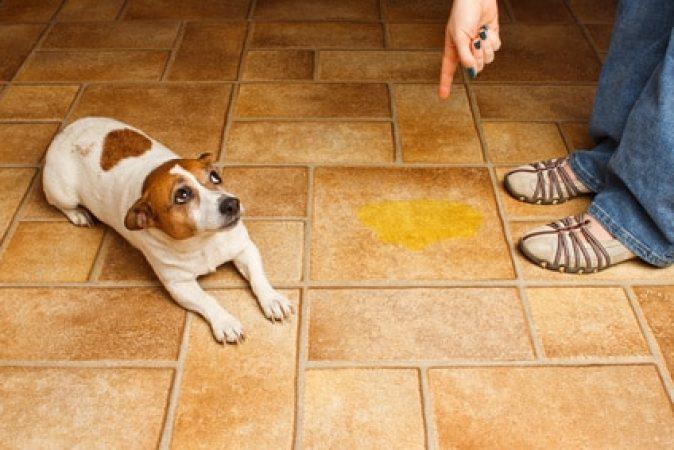chien propre