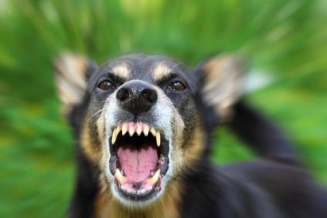 chien est peureux et agressif