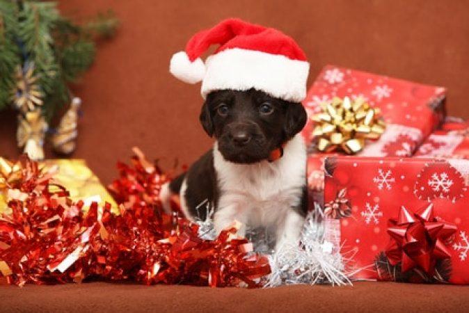 un chien en cadeau