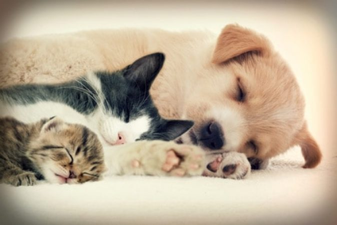 chien ou chat peu importe