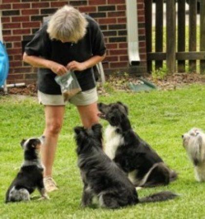 relation entre l'homme et le chien