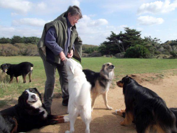 Comportementaliste, Interprète animalier